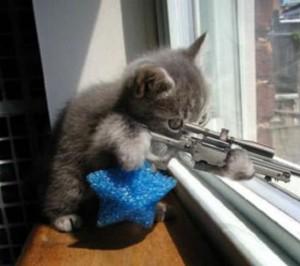 cat with gun